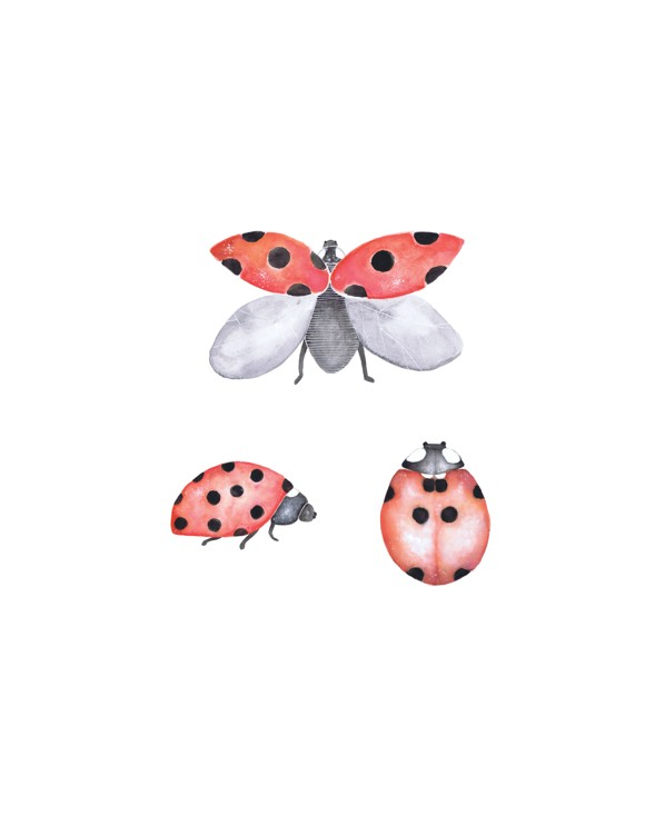 That's Mine - Wall Sticker Ladybird 3 pcs - Red (O8017)