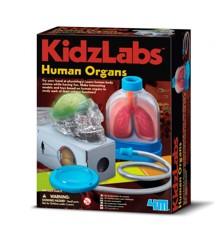 KidzLabs - The Human Organs (3374)